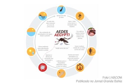 Infográfico-sobre-ciclo-de-reprodução-do-Aedes-Aegypti